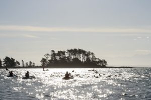 Port Nelson Summer Sea Swim Series @ Nelson Yacht Club